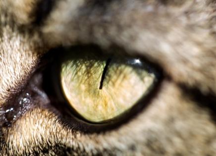 rasky eye